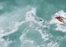 cane che stava annegando in mare