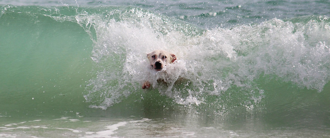 Cane in mare