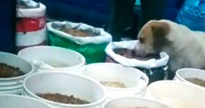cane randagio che mangia crocchette