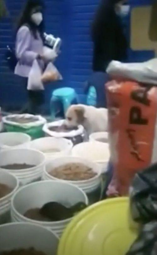 Cucciolo mangia a tradimento