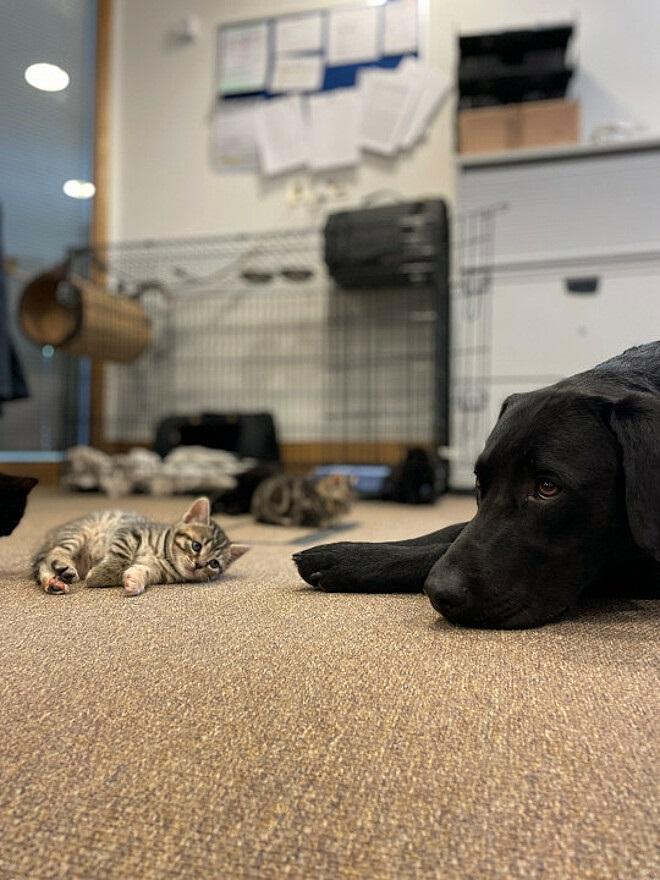 Cane e mici