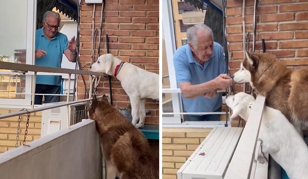 nonno si avvicina ai 2 cani del suo vicino