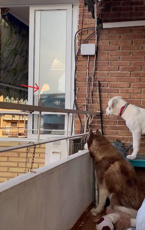 I cani di Isabel Critkian