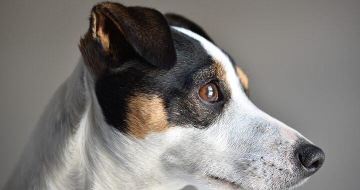 Pensionato morto per salvare il cane