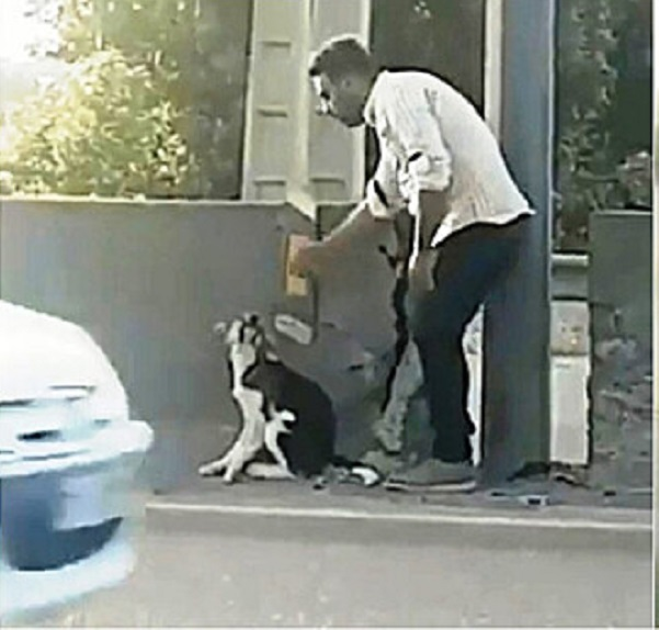 Salvataggio di un cane