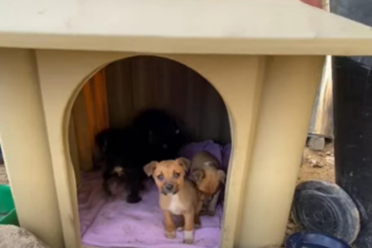 salvati 4 cuccioli