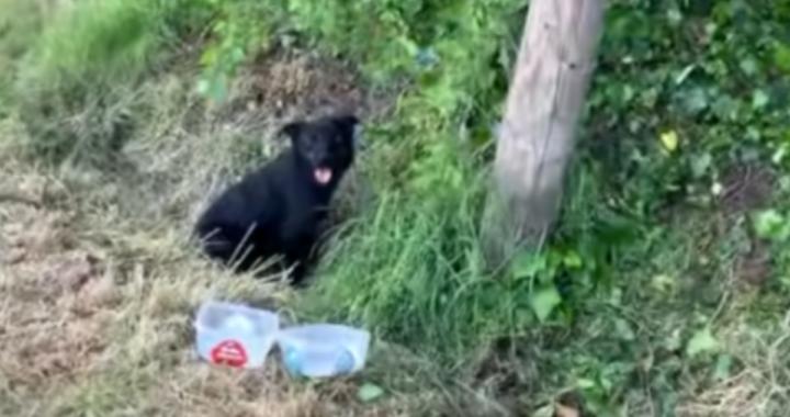 salvato cane abbandonato
