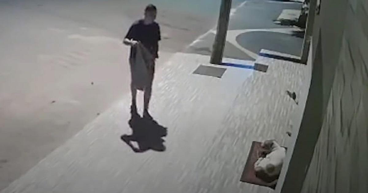 Cane tremante che vive in strada