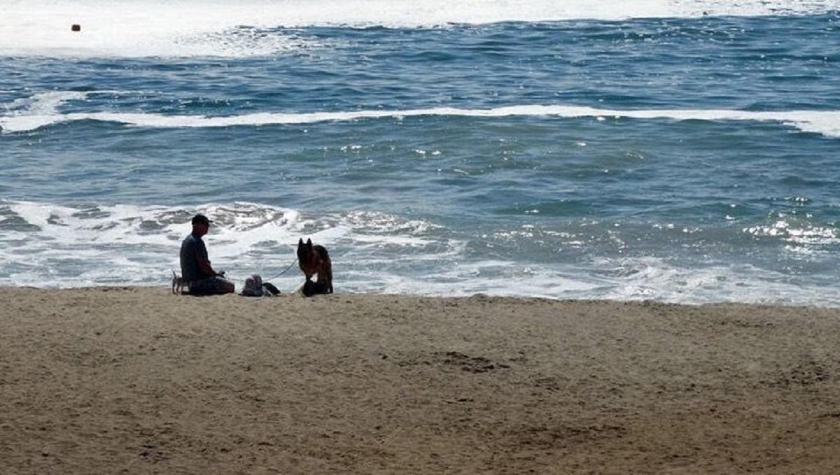 Uomo salva un cucciolo in mare
