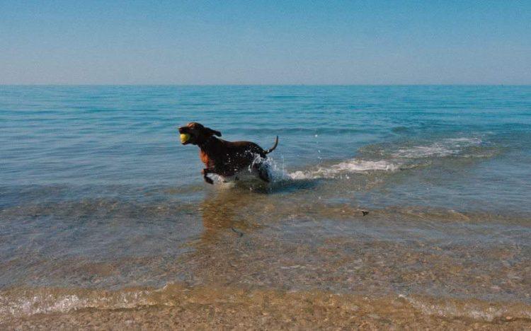 cane in spiaggia