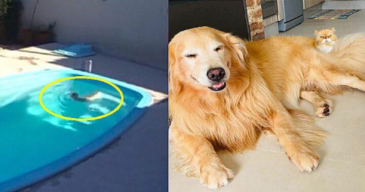 Vecchio gatto cieco cade in piscina