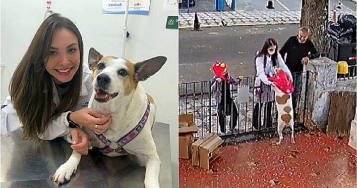 Vestiti per la cagnolina, veterinaria lancia un accorato appello