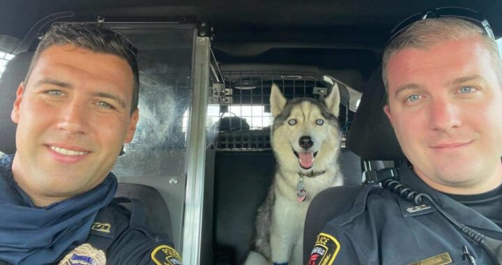 Zeke, il cane che aspetta il ritorno del suo amico umano dentro l'auto bollente: l'uomo era ormai senza vita