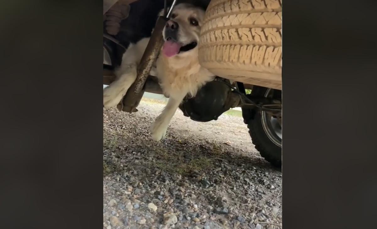 Il video del cane Albus