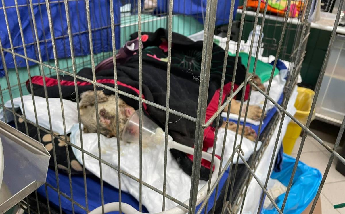 Angelo, il cane della Sardegna, è morto