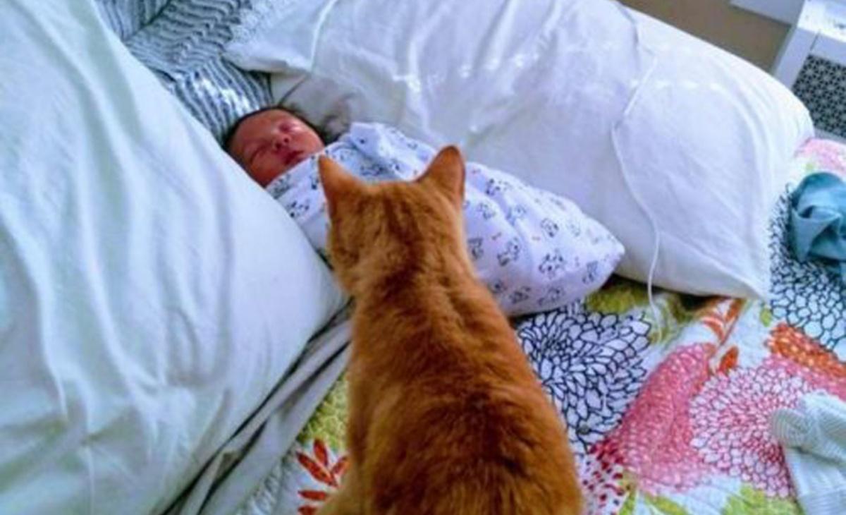 Ritrovato dopo 536 giorni il gatto Cat
