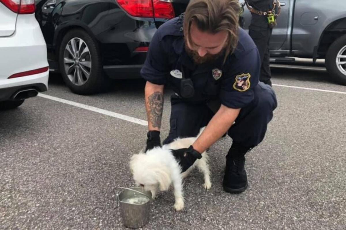 poliziotti salvano un cucciolo chiuso in auto rovente