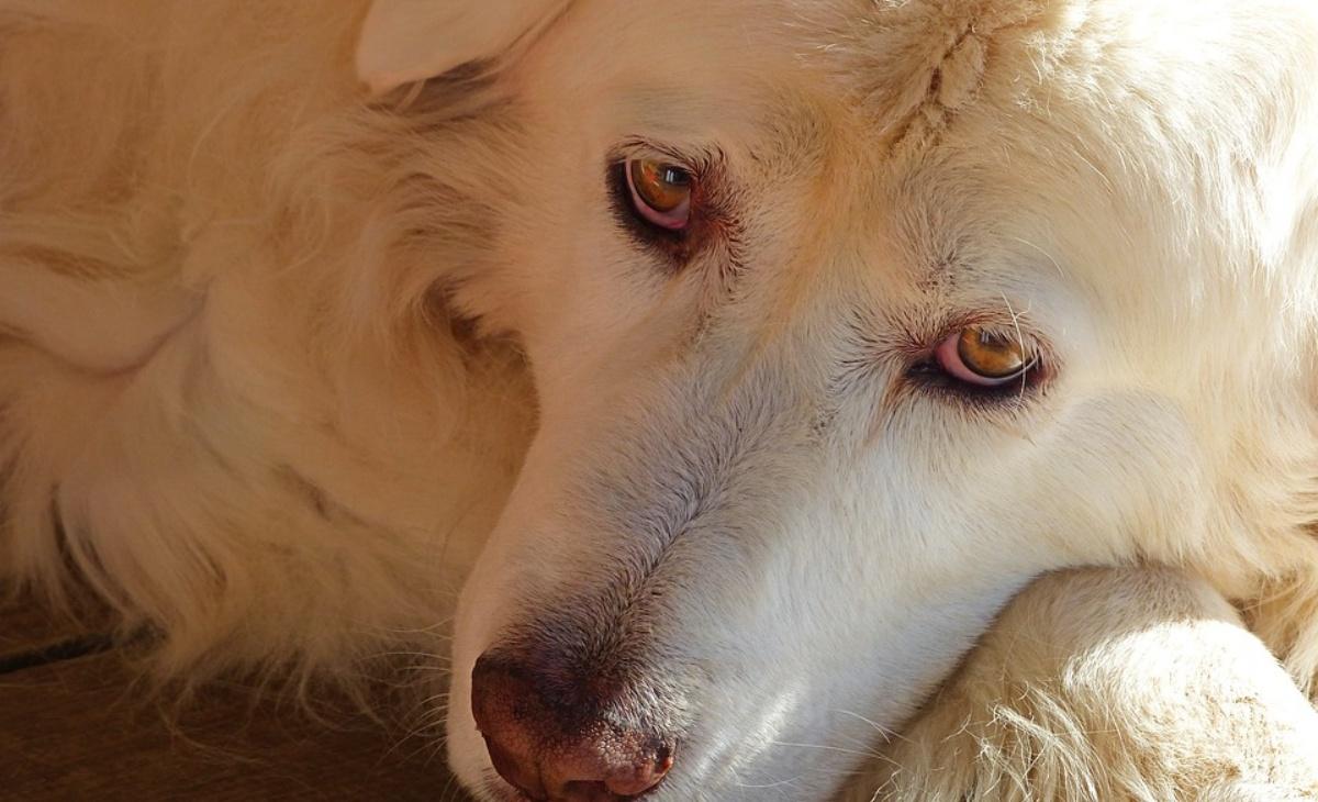 Dog sitter salva Emanuela e Lea