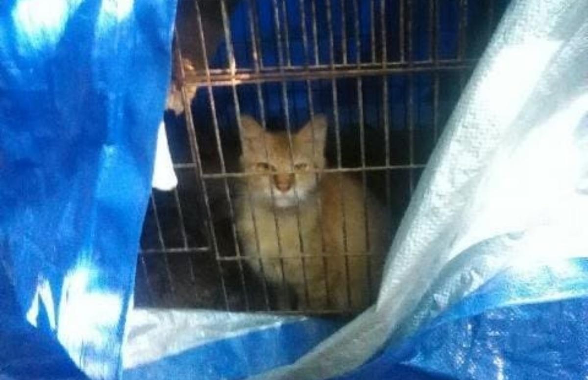 Gatto trovato in una gabbia per uccelli