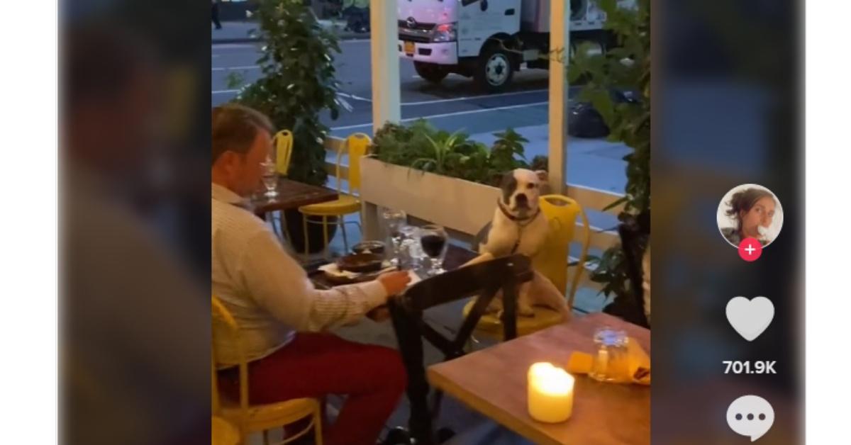 Gemma Colòn vede un cane a cena con il suo papà