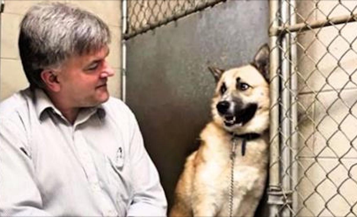 La storia del cane Jimmy