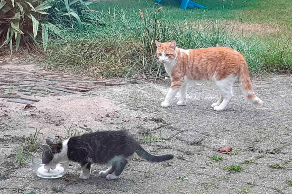 Klarieke adotta un gattino randagio