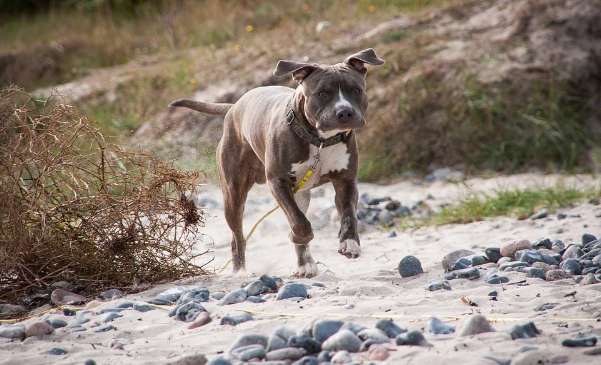 Militare spara al cane di una famiglia