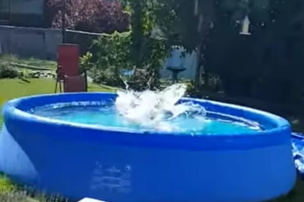 Il piano di un cagnolino per tuffarsi in piscina