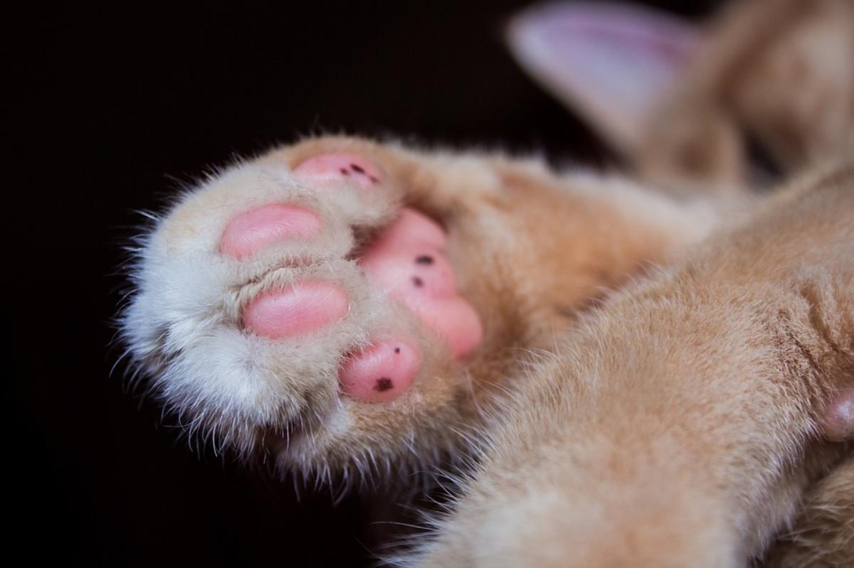 La storia del gatto Pumpkin