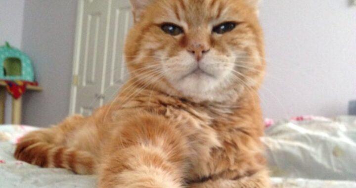 """La storia del gatto Pumpkin, abbandonato dalla sua famiglia perché """"perde troppo pelo"""""""