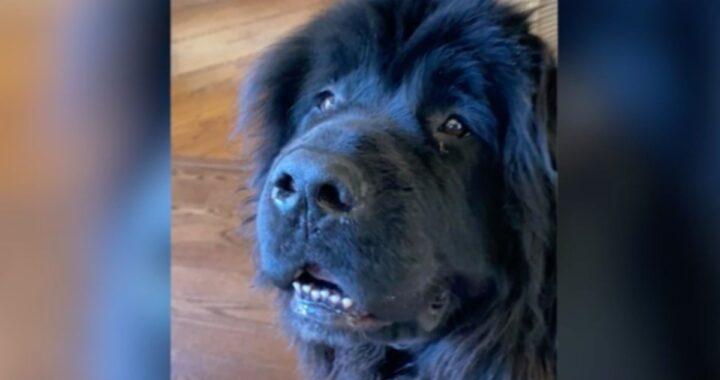 La triste storia del cane Samson