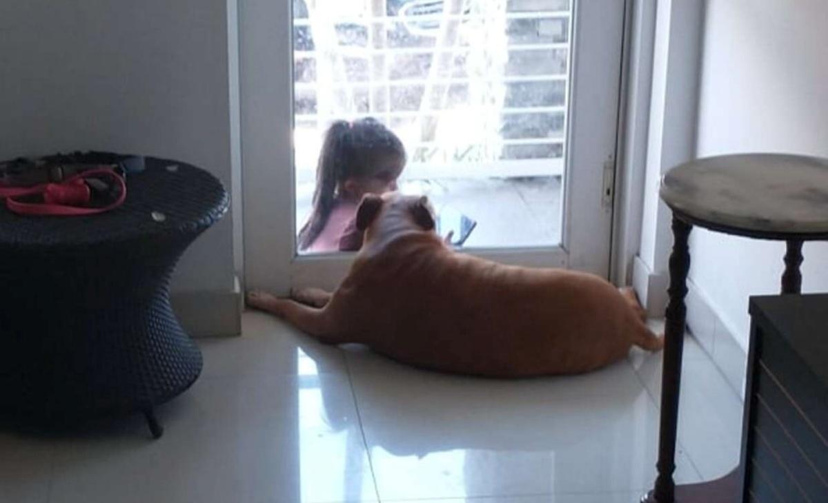 Le dolci immagini del cane Shetain e la bambina
