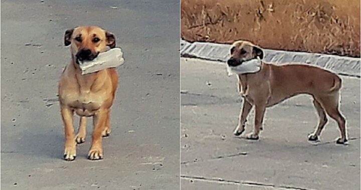 Cagnolina salvata da una famiglia