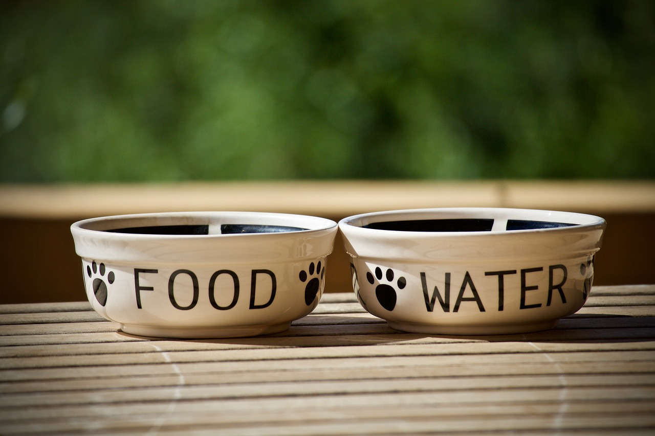 Water and puppy food