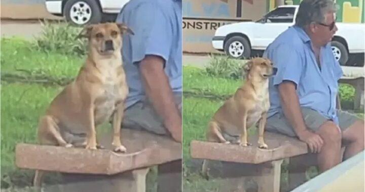 Cane ama sedersi di fianco e tenere compagnia agli sconosciuti in piazza