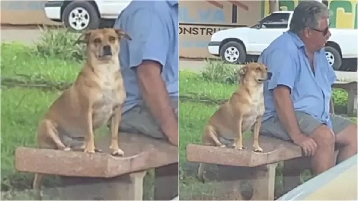 Dog sits next to strangers