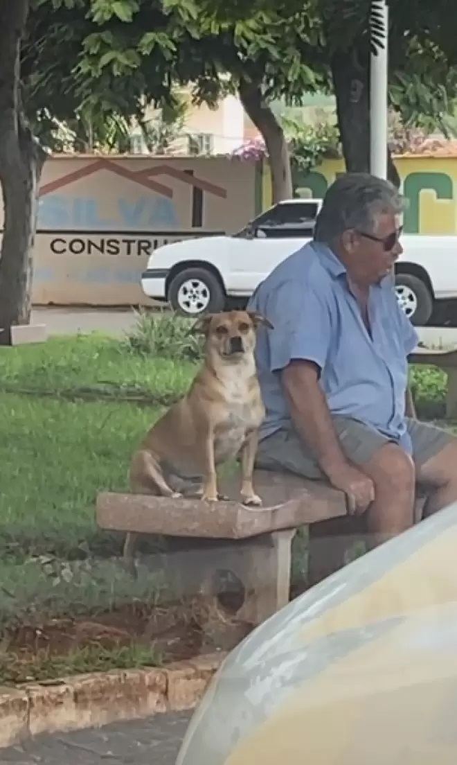 The dog and the man