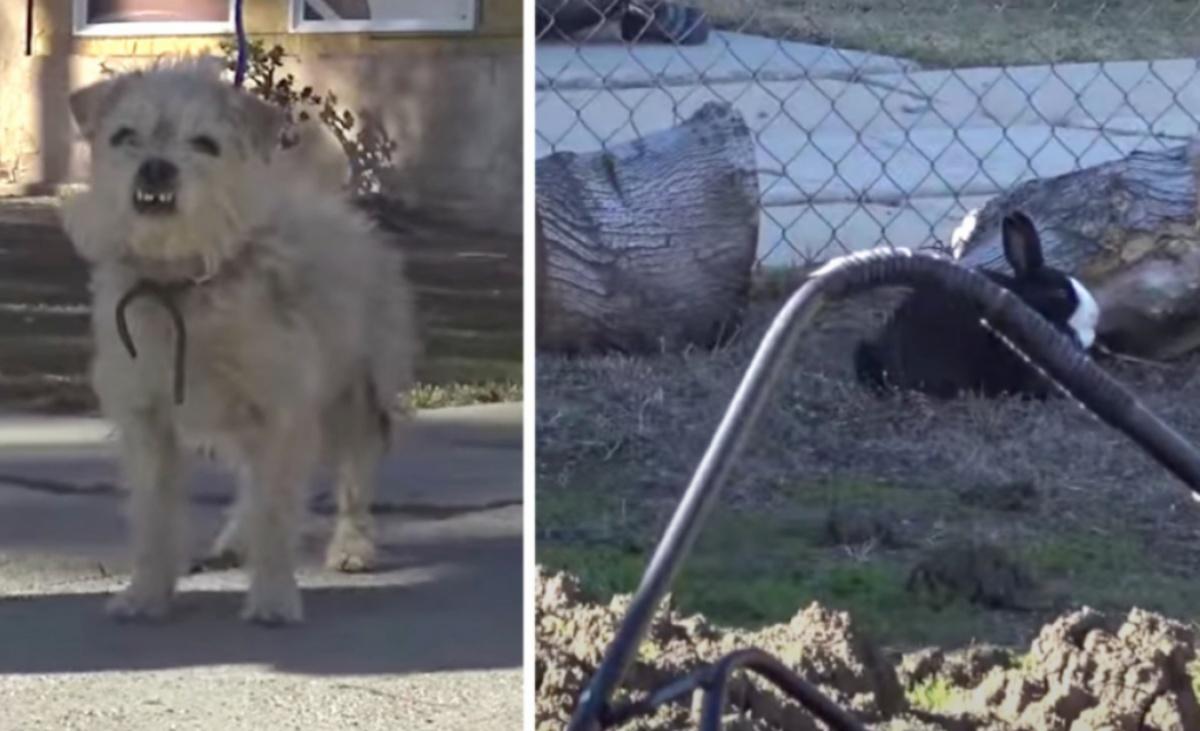 salvataggio cane e coniglio