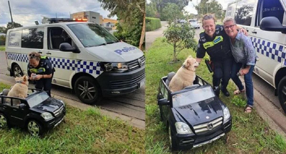 Dog drives a mini Mercedes-Benz
