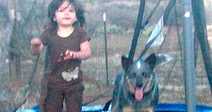Cane rimane accanto al bimbo nella foresta