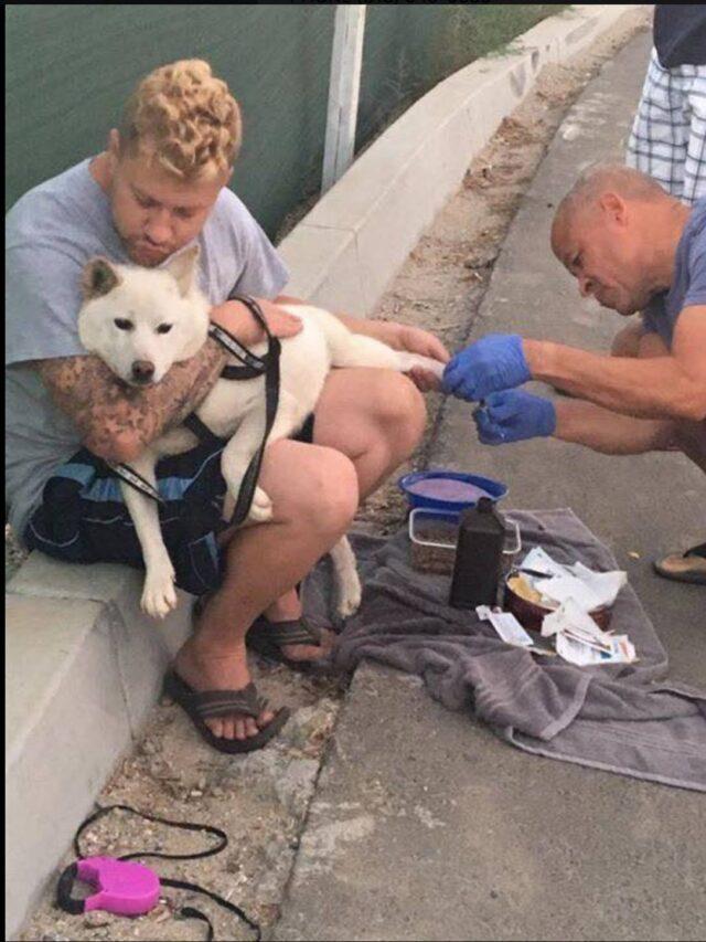 Cane smarrito salvato da un veterano