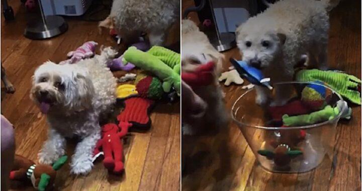 Cani rimettono a posto i giochi