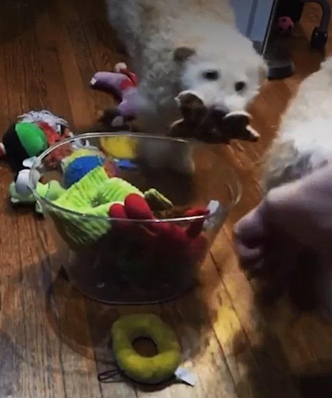 Cuccioli mettono in ordine
