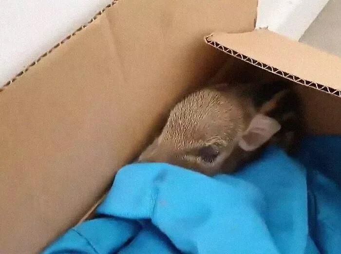 Animale abbandonato nella scatola