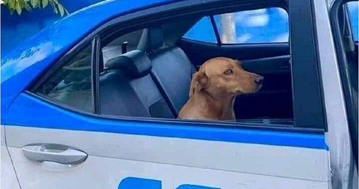 Cucciolo arrestato