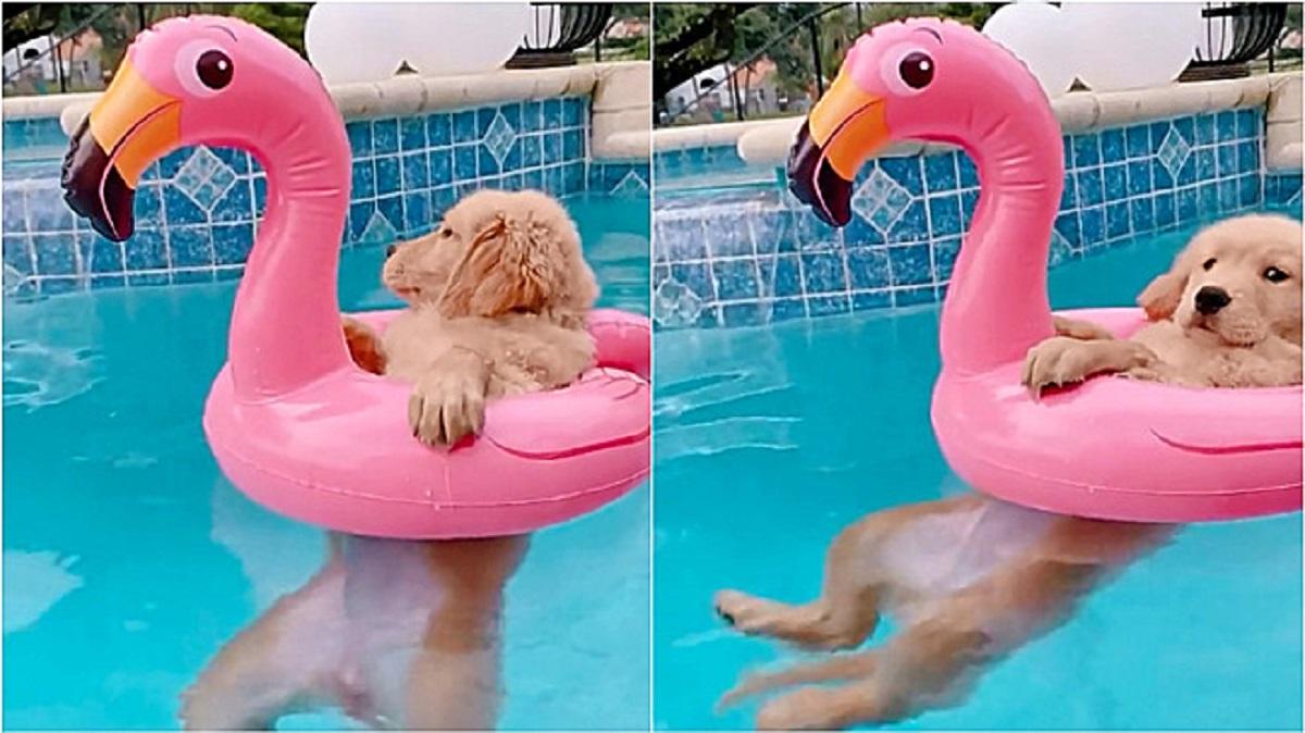 Cucciolo in piscina con un fenicottero