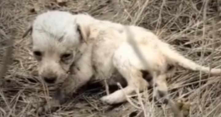 La trasformazione della piccola Daisy, la cucciola abbandonata pochi giorni dopo esser venuta al mondo