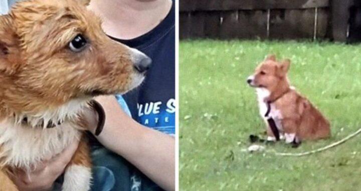 due cani temporale