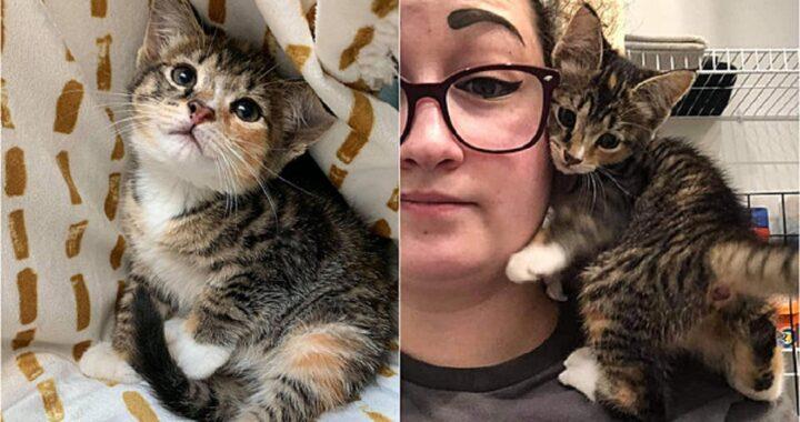 Gattino trovato in un buco