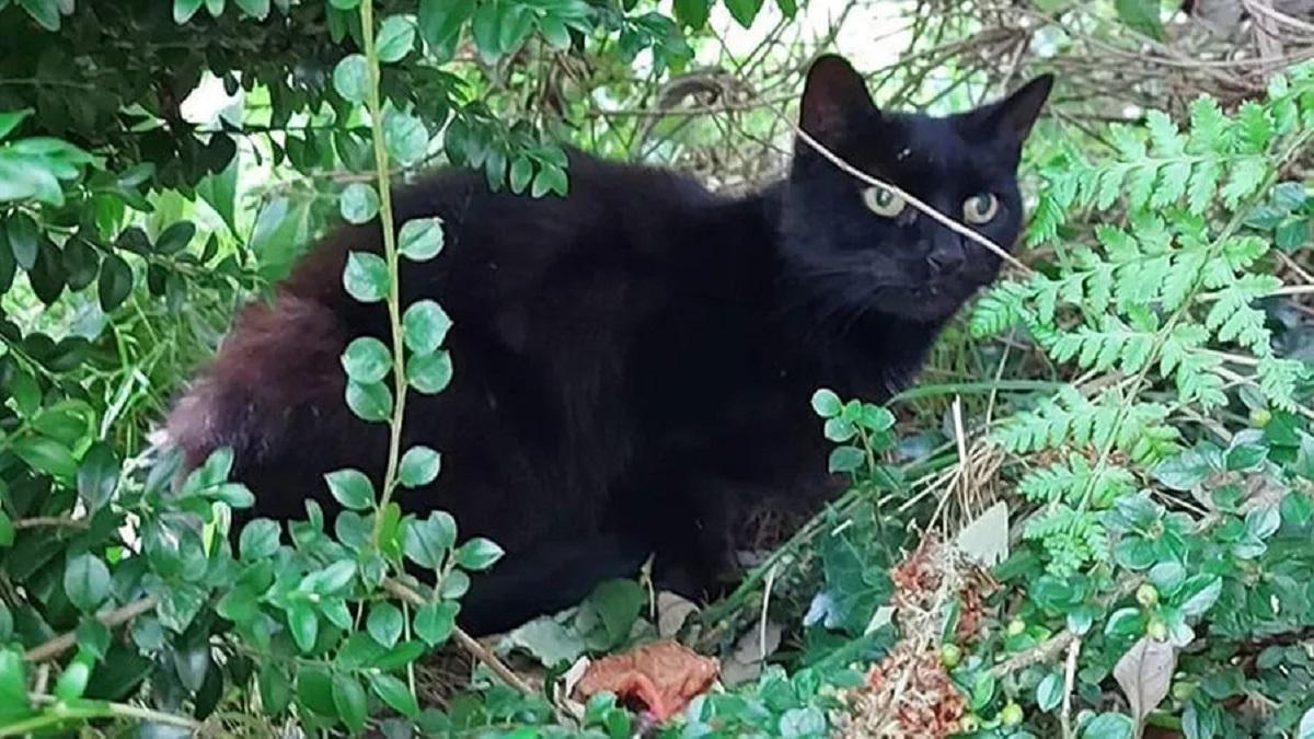 Gatto salva anziana proprietaria